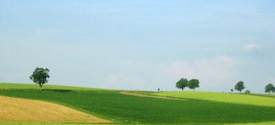 field-1367929-640x480