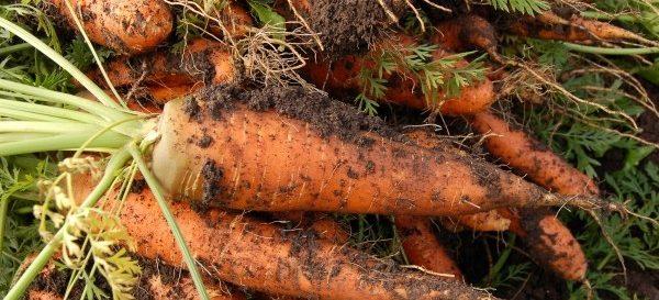 agricultura biologica nutrimento